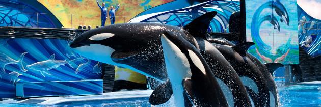 12 Dicas Obrigatórias para curtir o SeaWorld Orlando