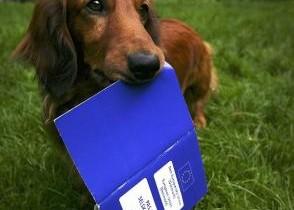 Como tirar o Passaporte para Cães e Gatos
