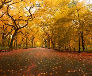 como-e-o-central-park-em-nova-york