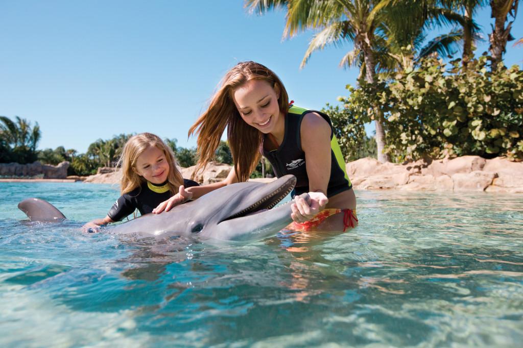 nadar-com-golfinhos-em-orlando-discovery-cove