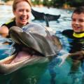 nado-com-golfinho-no-discovery-cove-orlando-dolphin-lagoon