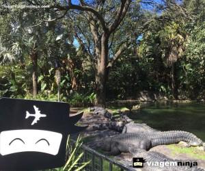 crocodilo-gigante-no-parque-busch-gardens